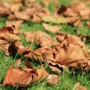 autumn-473059_1920