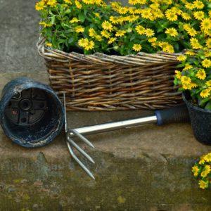 garden-1444235_1920