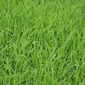 green-1834269_640