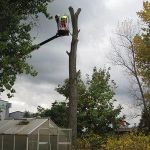 tree-1023385_640